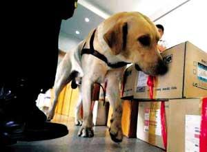 Retired sniffer dog becomes helper of sick owner