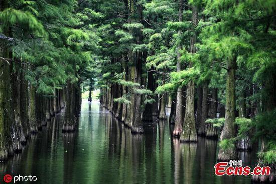 武汉美丽的水面森林