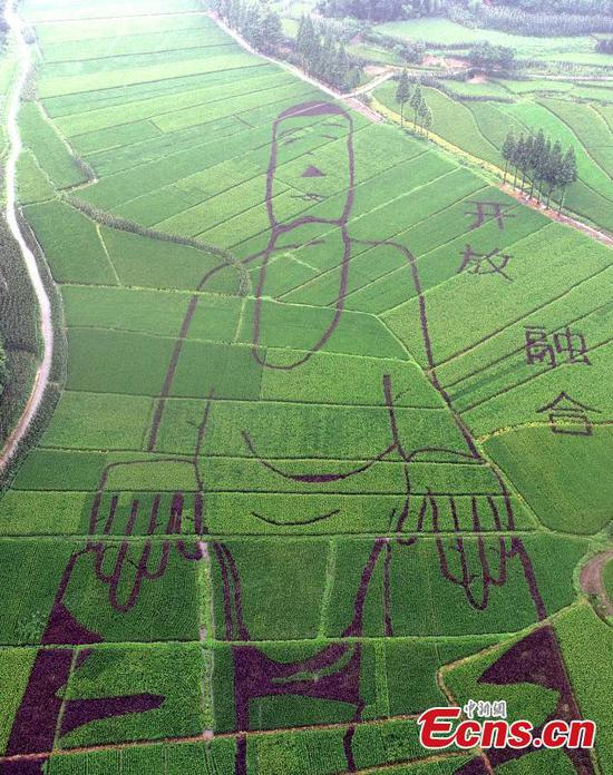 100-m long Buddha carved in rice field
