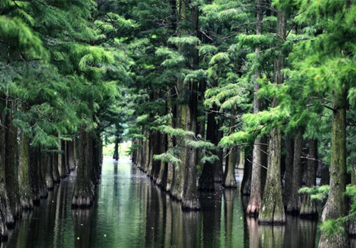 Wuhan's beautiful forest above water
