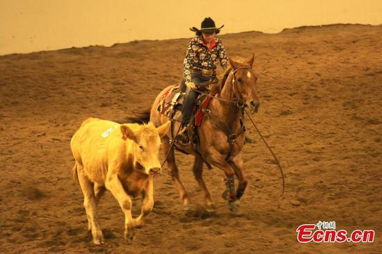 Annual Calgary Stampede opens in Canada