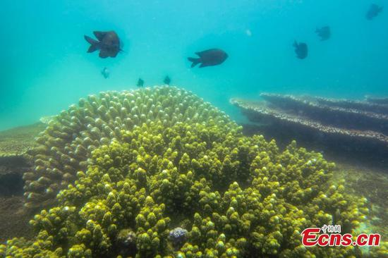 Southern China island fosters healthy underwater world