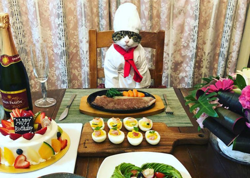 Cosplaying cat chef dines with its owner in different outfits