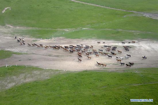 Thousand-year-old Shandan horse ranch in Gansu