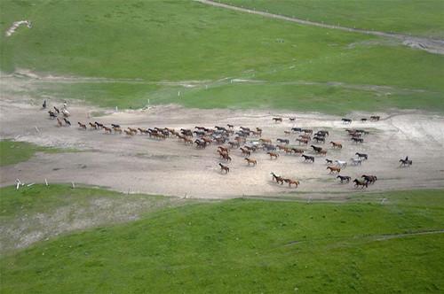 Thousand-year-old Shandan horse ranch in Gansu