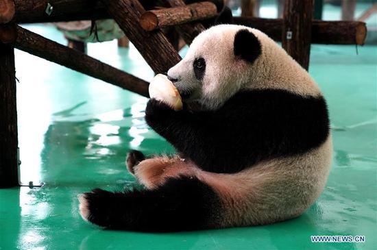 上海动物园采取措施帮助其动物抵御夏季热浪