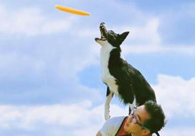 Autistic Children warm to Canine companions