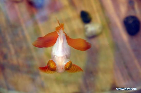 Exhibition featuring live goldfish opens in Forbidden City