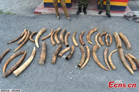 肯尼亚在沿海地区抢走价值18万美元的象牙