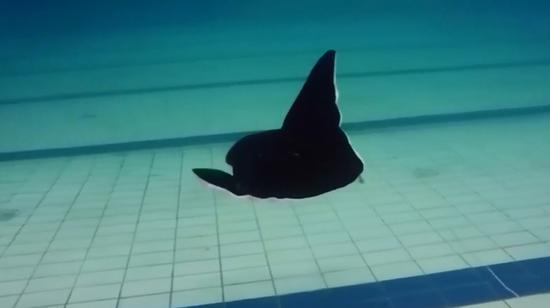 China develops devilfish-shaped soft robot
