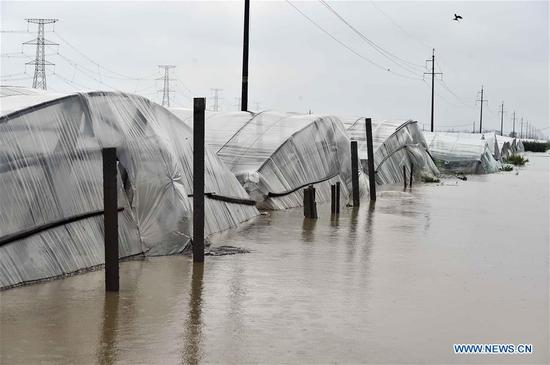 Vegetable greenhouses are flooded due to heavy rainstorms brought by typhoon Lekima in Jitai Town of Shouguang, east China's Shandong Province, Aug. 11, 2019. The city of Shouguang, China's major vegetable production base, suffered from the largest rainfall since the meteorological record started in 1959. Floodwater inundated 18,000 vegetable greenhouses in Shouguang and damaged 8,667 hectares of crops. (Xinhua/Guo Xulei)