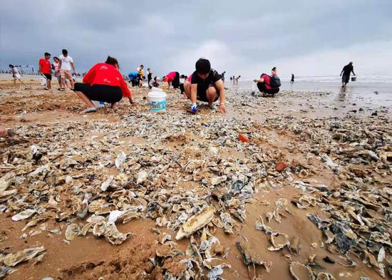 Typhoon brings unexpected gift of oysters to Qingdao