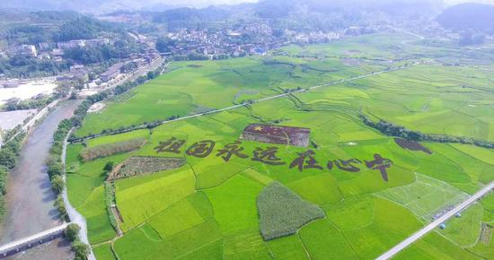 Spectacular views of paddy fields in Guizhou