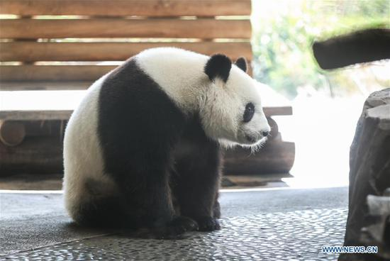 Zoo Berlin getting ready to welcome newborn panda cubs