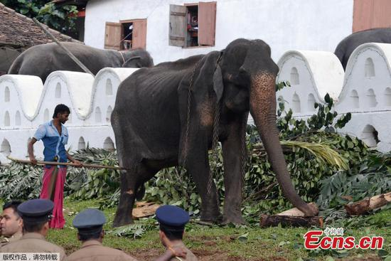 Heartbreaking photos of emaciated elephant have people calling for action
