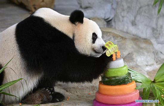 Two giant pandas celebrate 6th birthday in China's resort island