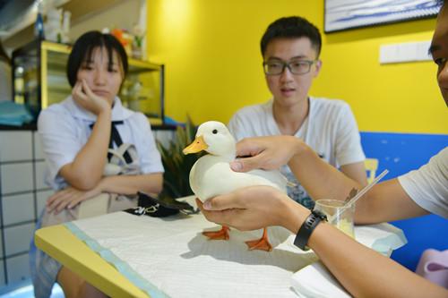 Pet ducks woo customers to cafe in Chengdu
