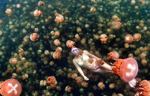Diver swims with thousands of jellyfish
