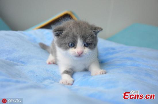 China's first cloned cat born in Beijing