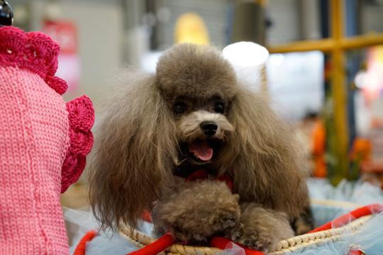 Pet fair kicks off in Shanghai