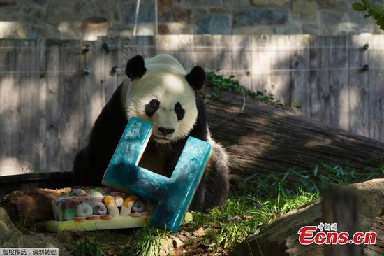 Giant panda Bei Bei turns four in U.S.
