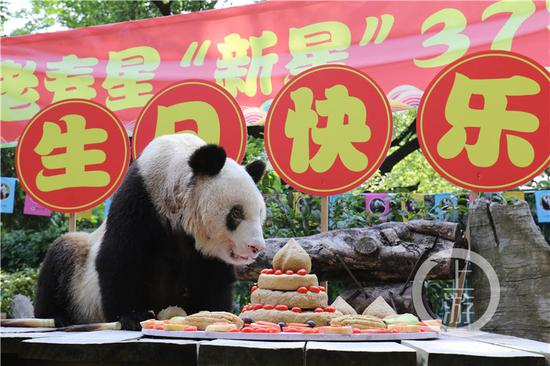 World's oldest captive giant panda turns 37