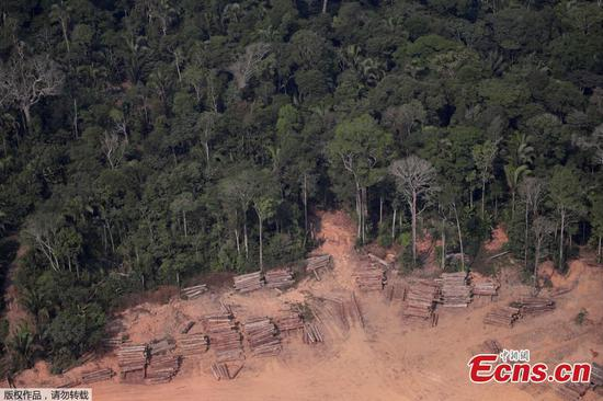 Aerial pictures reveal rampant illegal logging in Amazon forest