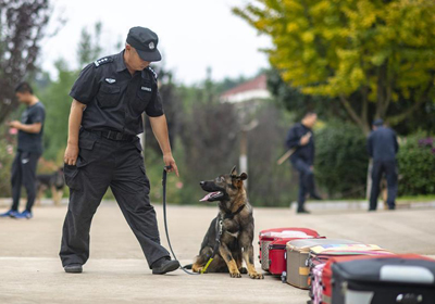 China's first cloned police dog starts service in Yunnan