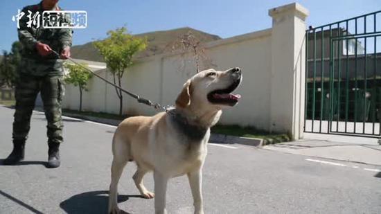 Veteran and his dog: Hard to say goodbye