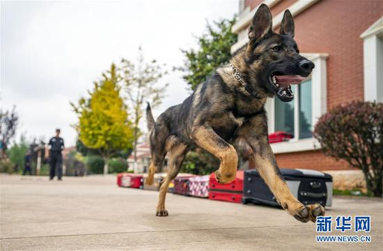 China's first cloned police dog ready for missions