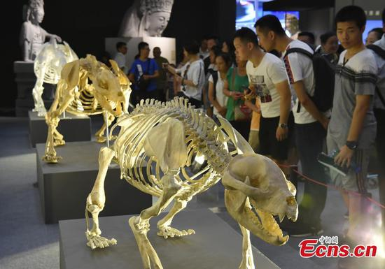 Chongqing expo showcases smart technology application