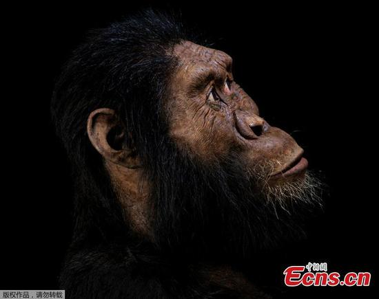 'Unprecedented' skull reveals face of human ancestor