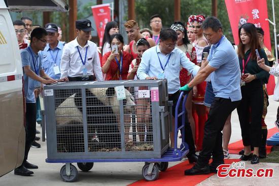Ten pandas settle at Nanjing zoo