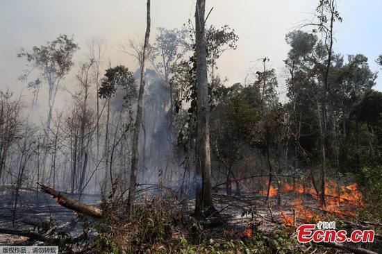 消防员动员起来扑灭亚马逊雨林中的火灾