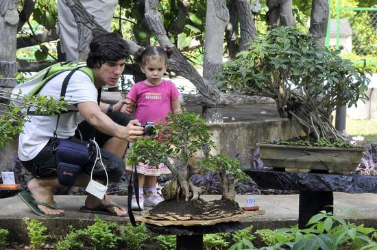 Residents visit the bonsai exhibition
