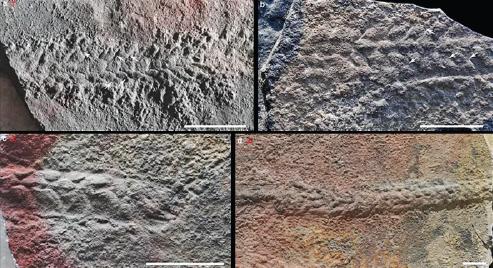 研究人员认为,这些痕迹提供了动物活动的最早证据。 (照片/自然)