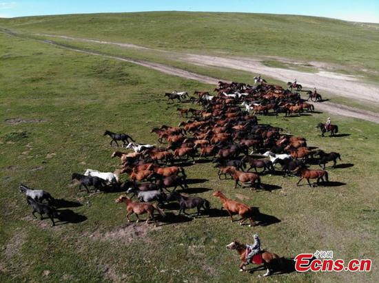 World's oldest Shandan horse ranch in Gansu