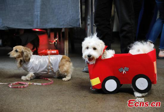 Dogs don car costumes for quirky race