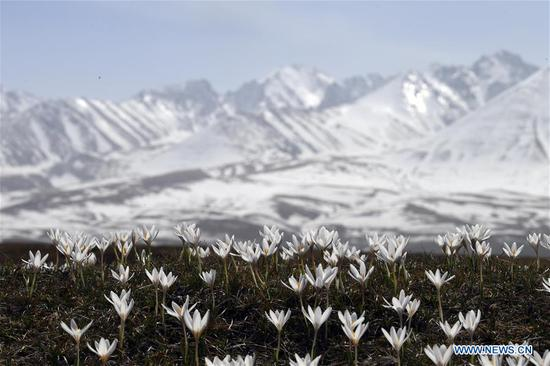 Xinjiang carries out projects to improve local ecological environment