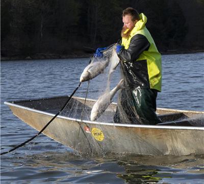 James Berry lands a carp on Barkley Lake, Kentucky.(Photo provided to China Daily)
