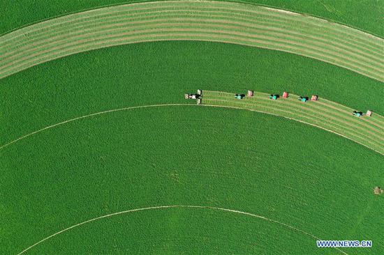 People celebrate harvest season across China