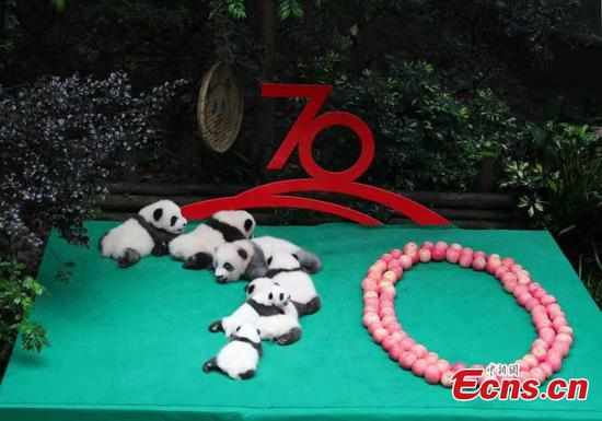 Panda cubs in public for China's 70th anniversary