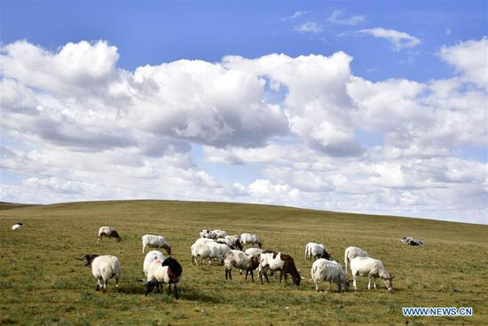Ecological environment of Qinghai Lake area improves in recent years