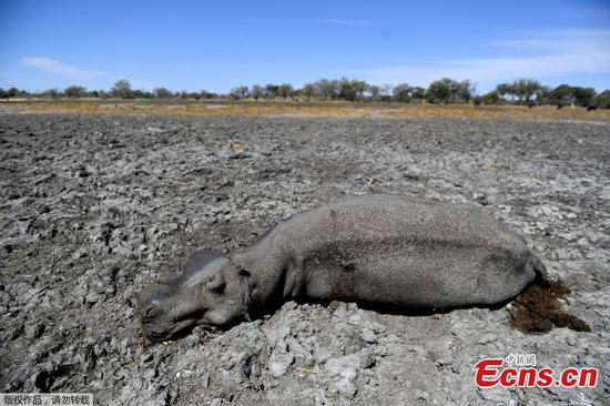 Animals struggle in drought-hit Botswana