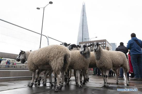 Annual Sheep Drive across London Bridge held in London