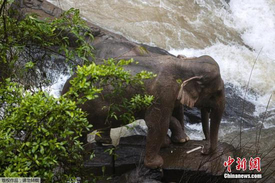 5 more elephants found dead in Thai waterfall ravine