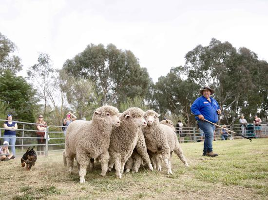 23rd Boorowa Irish Woolfest celebrated in Australia