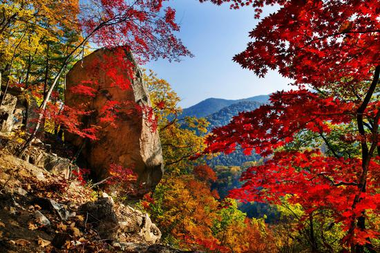 Colorful maple trees in Benxi attract visitors