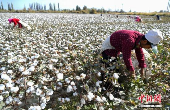 Huge subsides by developed economies crux of cotton issue: Chinese ambassador