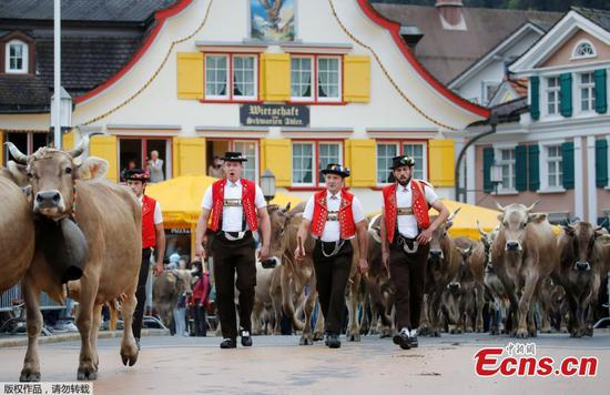 People lead cows to famed cattle market in Appenzell, Switzerland